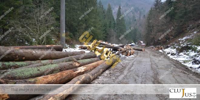 lemne busteni pe drum