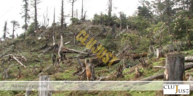 Un fost pădurar, arestat în 2017, își continuă afacerile forestiere necurate prin firma deținută de nora lui