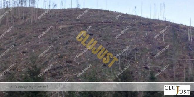 """O clasare previzibilă, dar pe neașteptate. S-au tăiat ilegal 35.000 mc de """"aur verde"""", nimeni nu răspunde"""