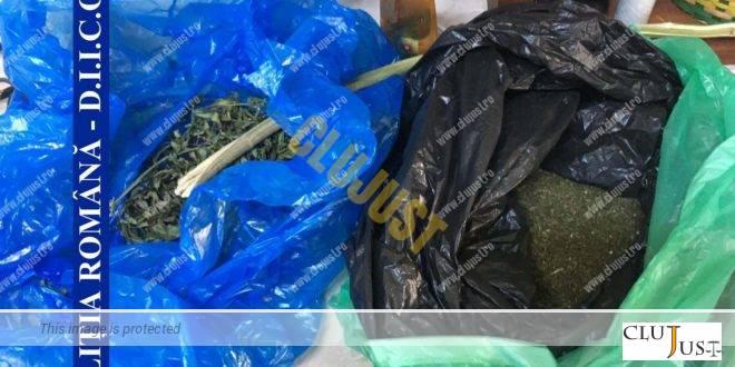 Un tânăr care cultiva plante de cannabis și vindea drogul într-un bar din Cluj-Napoca a fost arestat