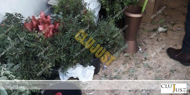 Amendă de sezon. O florărie din centrul Clujului a fost sancționată cu 20.000 lei de Protecția Consumatorilor