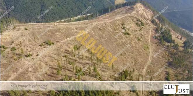 Petiția zguduitoare a unui clujean victimă a tăierilor ilegale de pădure către Ministrul Justiției