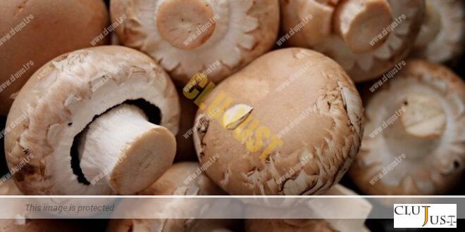 Au comandat ciuperci halucinogene după un documentar pe Netflix, iar polițiștii le-au schimbat cu Champignon