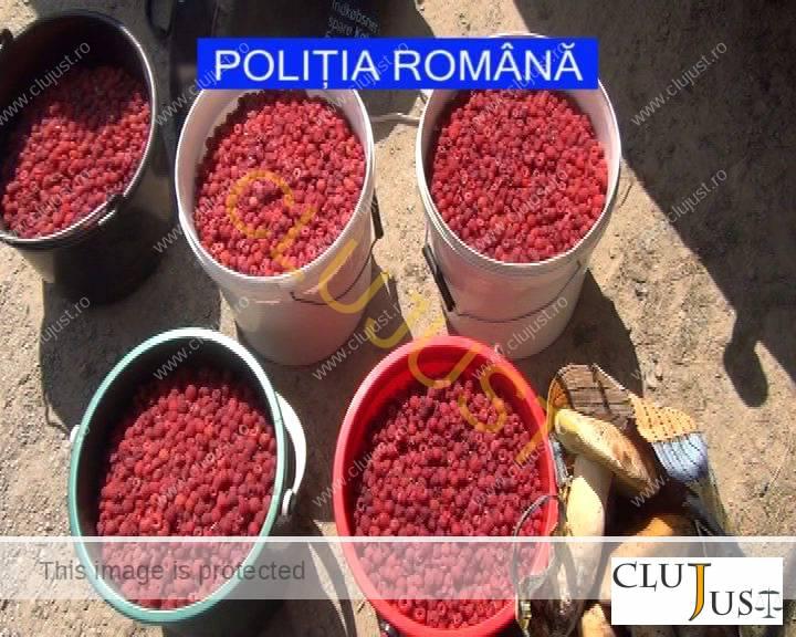 politia amenzi actiune fructe de padure (6)