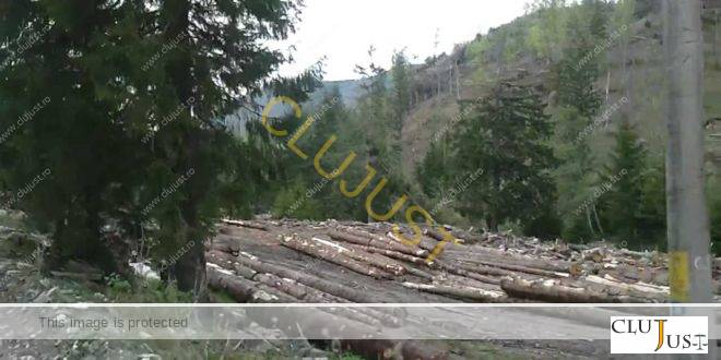 Lovitură zdrobitoare pentru Garda Forestieră Cluj! Instanța arată că l-a amendat pe nedrept pe proprietarul furat