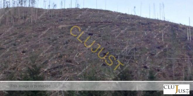 În stare de urgență, Garda Forestieră Cluj somează un proprietar să împădurească un teren defrișat de 10 ani