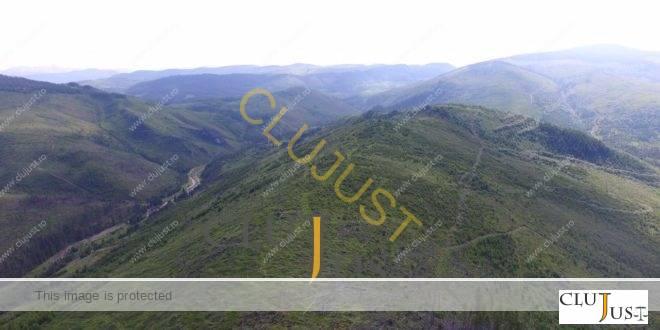 Premeditarea și complicitățile hoților de păduri din Maramureș, descrise într-un raport primit de DNA Cluj acum 7 ani!