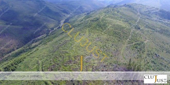 Garda Forestieră Cluj și Direcția Silvică Maramureș, pe marginea prăpastiei în cazul pădurilor dispărute