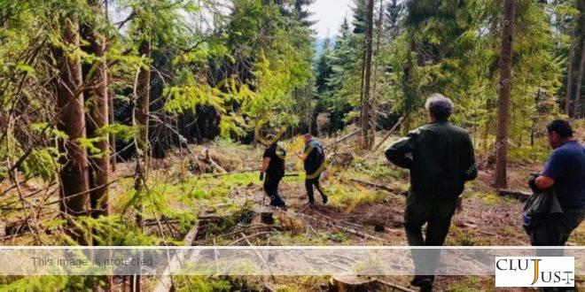 Cum se maschează tăierile ilegale de pădure la Beliș