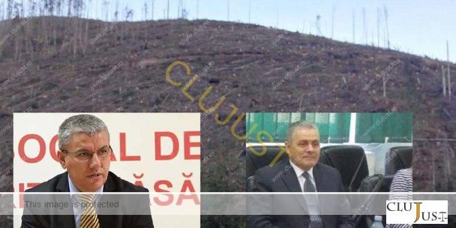 Inexplicabil. Cum acoperă Ministerul Pădurilor defrișarea a 146 hectare de pădure de la Borșa