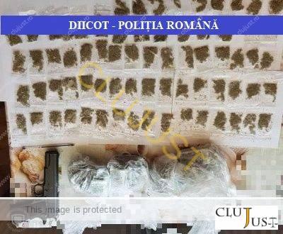 Rețea vastă de traficanți de etnobotanice din Cluj-Napoca, anihilată de DIICOT. 18 percheziții, sute de grame de subtanțe găsite