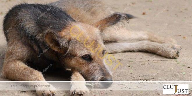 O asociație din Cluj cere expulzarea imigranților vietnamezi din comuna Gilău după ce aceștia au mâncat un câine