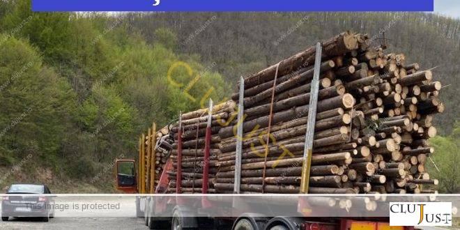 Poliția a confiscat peste 1100 mc de material lemnos de la o firmă din Cluj-Napoca